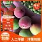 丽江野生小红梅 红梅鲜果现摘泡酒酵素野生红梅鲜果酸梅子6斤包邮
