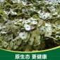 【基地直销】优质青钱柳种子 铜钱树摇钱树种子批发 量大从优