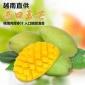 越南玉芒芒果香芒5斤大小青皮芒新鲜热带水果非金煌凯特芒小台农