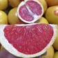 新鲜水果农家柚子 特产白心蜜柚 西柚沙田柚平和红肉蜜一件代发