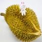 泰国金枕头榴莲新鲜带壳水果现摘特产包邮2-10斤金枕头批发