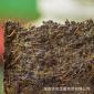 湖南安化黑茶厂家直供2013年陈年金花茯茶400g茯砖茶安化茶叶批发